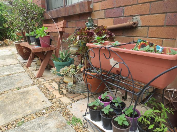 garden sx40 pc 045_4000x3000