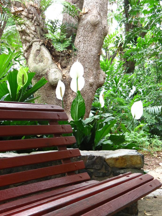 Townsville Palmetum pcsx40 068_3000x4000
