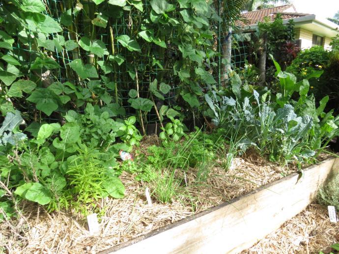 Garden March 2015 032_4000x3000