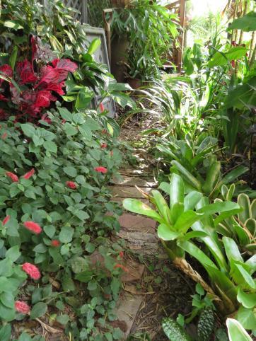 Garden March 2015 046_3000x4000
