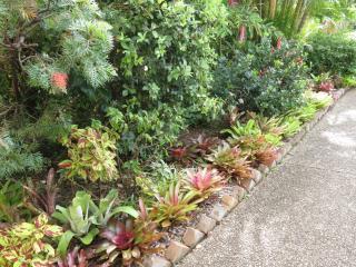 Garden March 2015 062_4000x3000