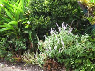 Garden March 2015 063_4000x3000
