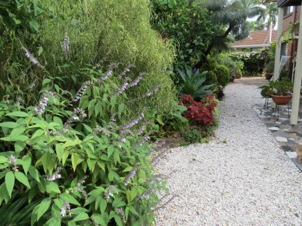 Garden March 2015 073_4000x3000