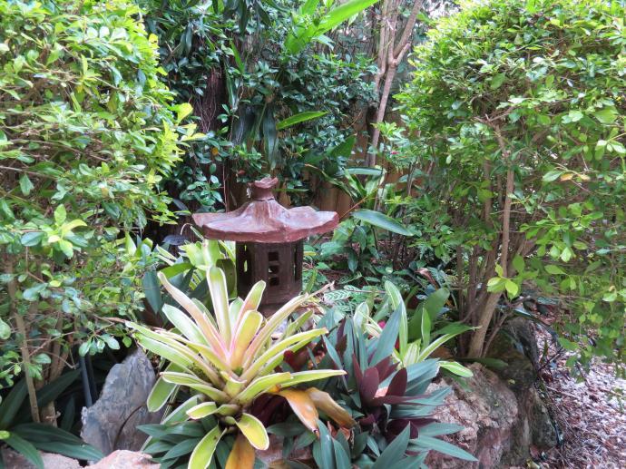 Garden March 2015 075_4000x3000