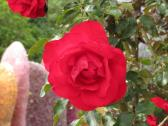 Akaroa Giart house garden PC 120_4000x3000