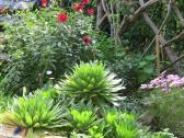 Akaroa Giart house garden PC 141_4000x3000