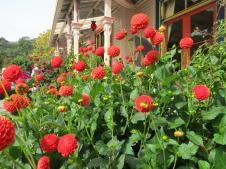 Akaroa Giart house garden PC 154_4000x3000