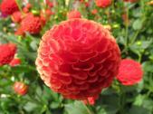 Akaroa Giart house garden PC 156_4000x3000