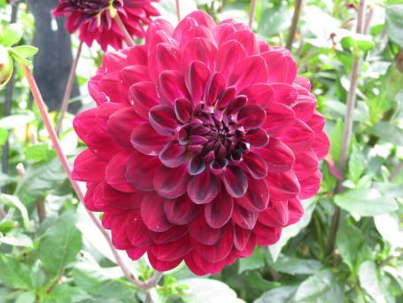 Akaroa Giart house garden PC 209_4000x3000