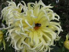 Akaroa Giart house garden PC 277_4000x3000