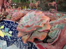 Akaroa Giart house garden PC 285_4000x3000