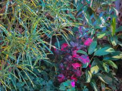 foliage 3 types_4000x3000