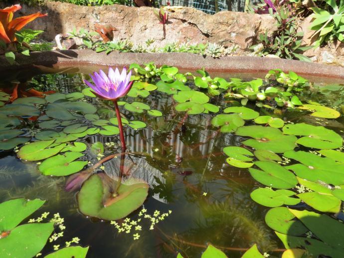 May 2015 garden 007_4000x3000