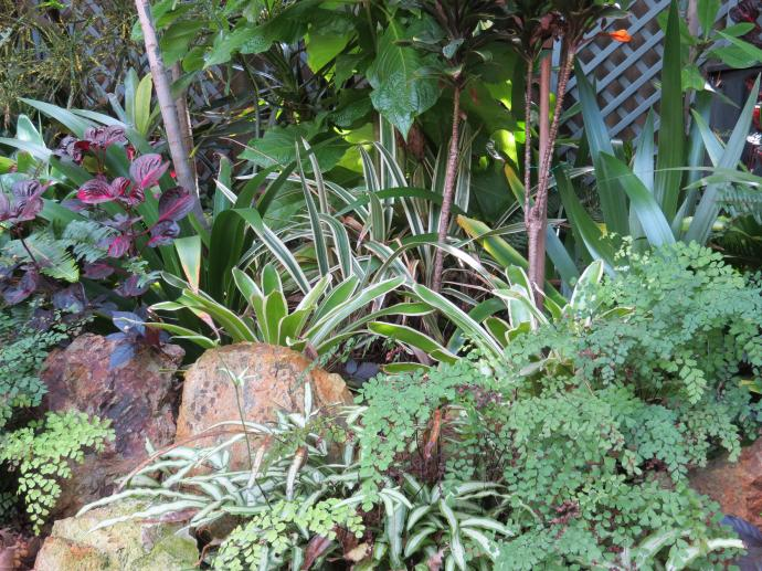 May 2015 garden 030_4000x3000