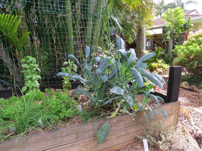 May 2015 garden 045_4000x3000