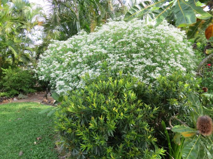 May 2015 garden 050_4000x3000
