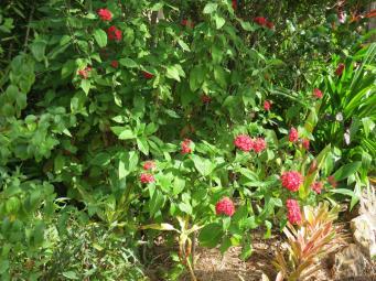 May 2015 garden 051_4000x3000
