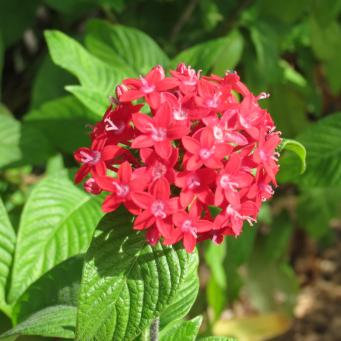 May 2015 garden 053_4000x3000