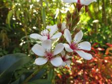 May 2015 garden 063_4000x3000