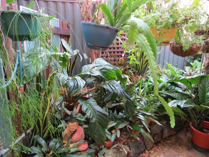 May 2015 garden 085_4000x3000