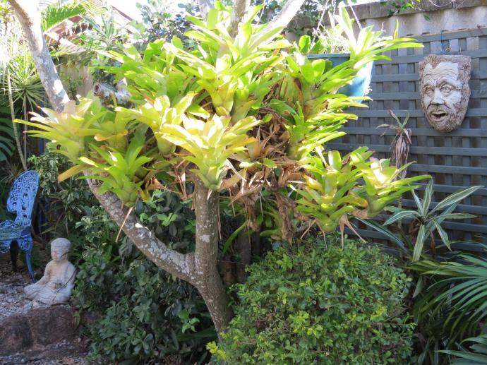 May 2015 garden 103_4000x3000