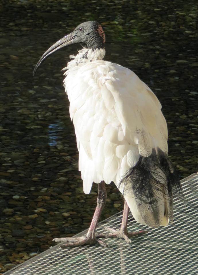 Pelican Lake pc 081_1881x2611