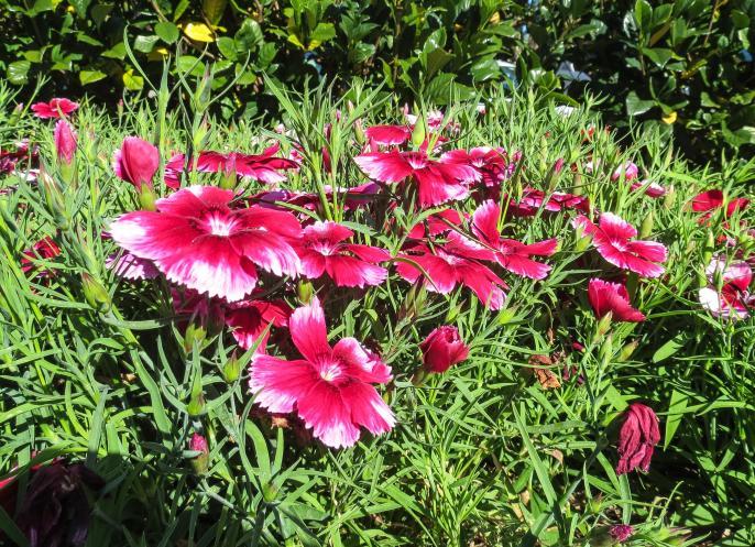 GC botanic garden-11_3437x2492