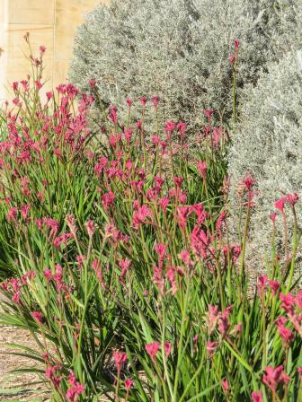 GC botanic garden-12_3000x4000