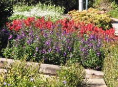 GC botanic garden-14_3584x2649