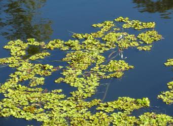 GC botanic garden-31_3769x2760
