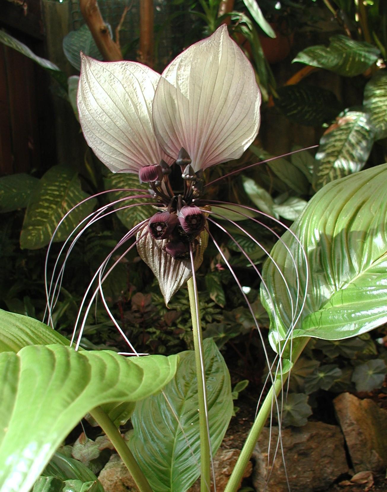 a flower a week