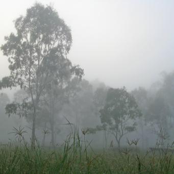 fog web 015_3264x2448