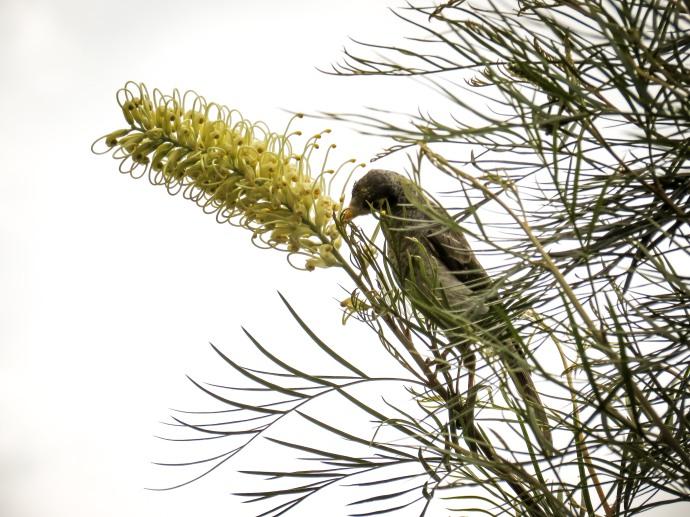 spring flowers aug-3