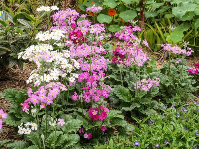 spring flowers aug-5