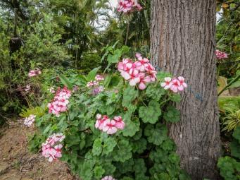 spring flowers aug-6