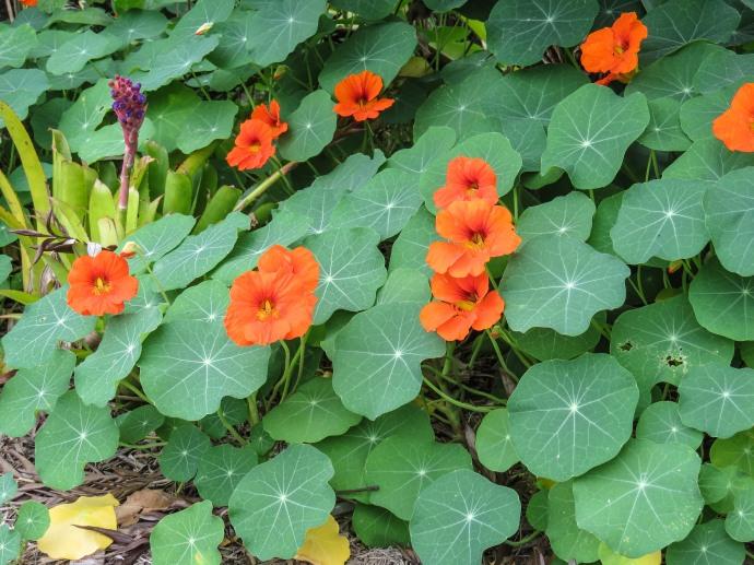 spring flowers aug-7