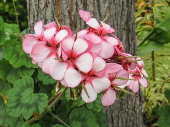 spring flowers aug-8