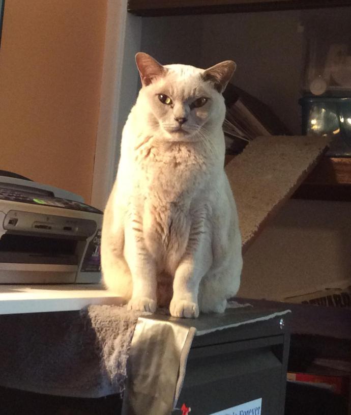 lenny cat_1766x2087