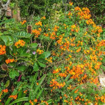 spring garden-3_3472x2586