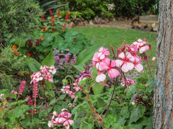 spring garden-5_4000x3000
