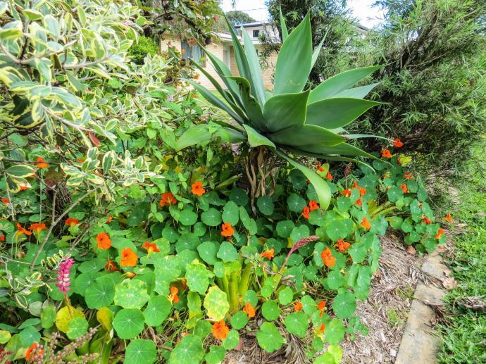 spring garden-7_4000x3000