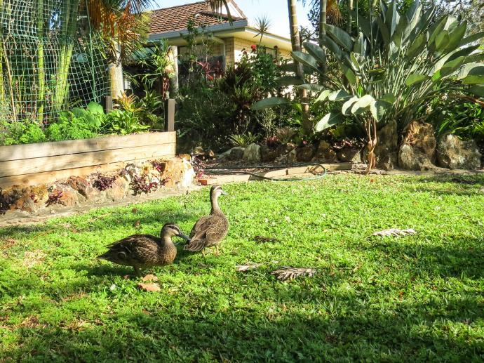 duck in-1-2_2640x1980