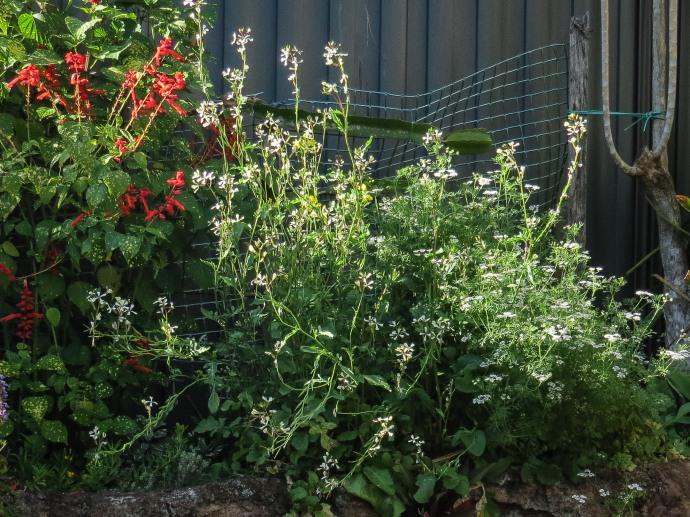 garden walk-3