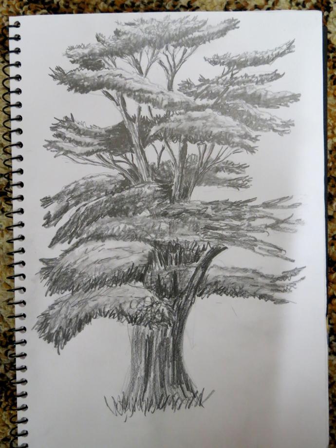 bauhinia frangipani tree sketch pc 007_2840x3785
