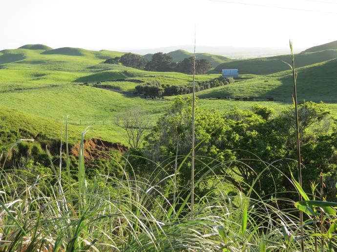 early orning farm walk grasses pc 014_4000x3000