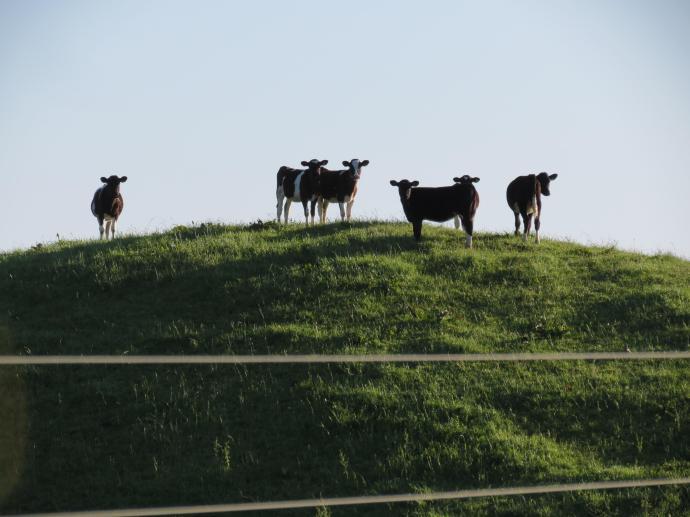 early orning farm walk grasses pc 020_4000x3000