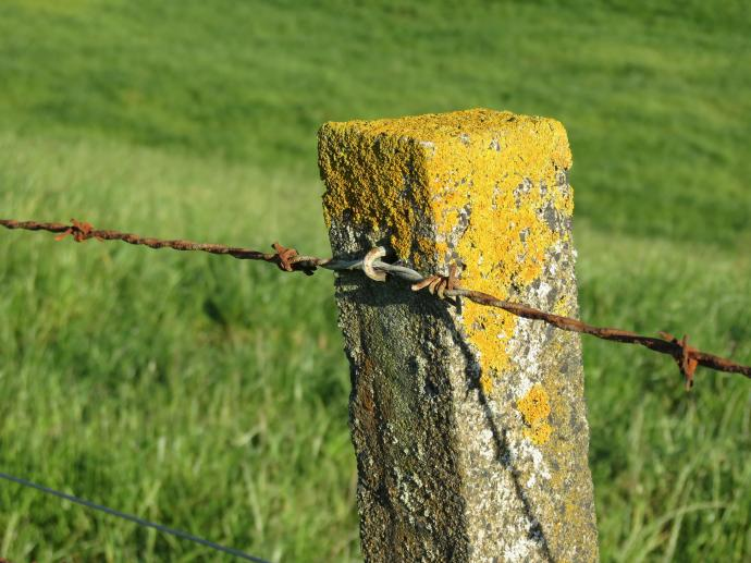 early orning farm walk grasses pc 026_4000x3000