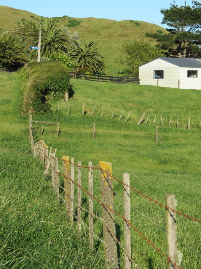 early orning farm walk grasses pc 028_3000x4000