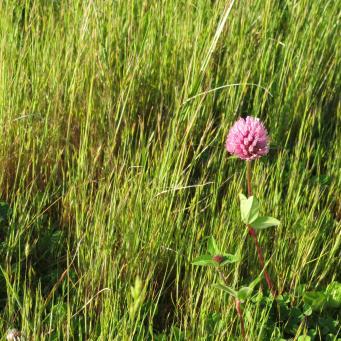 early orning farm walk grasses pc 031_4000x3000