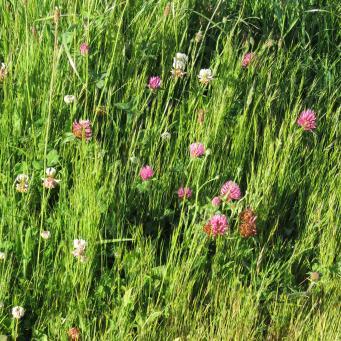 early orning farm walk grasses pc 033_4000x3000